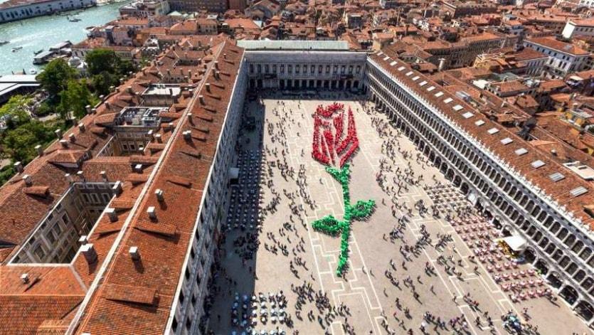 Festa di San Marco красная роза